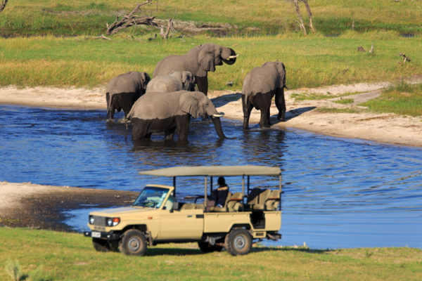 Elephant Safari, Chobe National Park