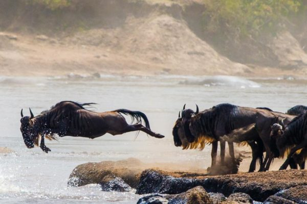Great Migration Tanzania