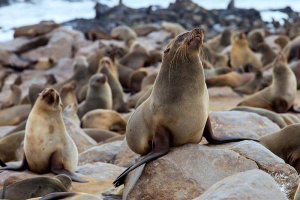 Seals Namibia Skeleton Coast
