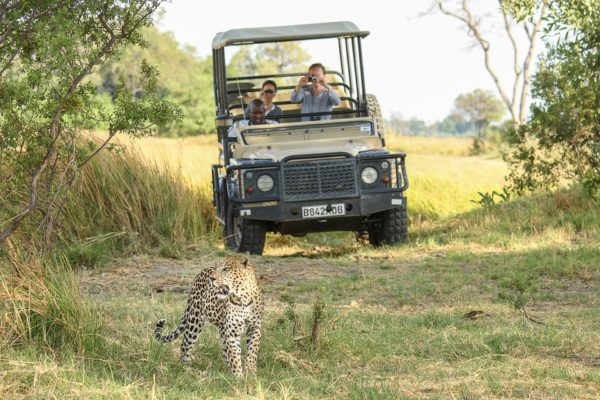 Leopard spotted on Safari