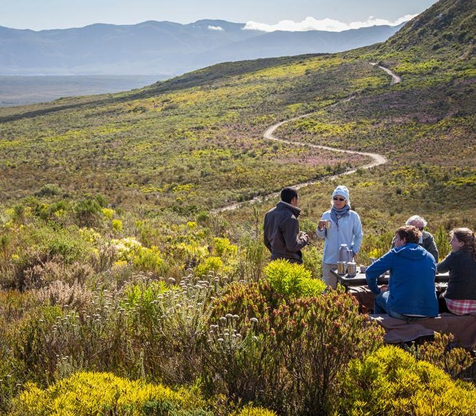 Picnic at Grootbos Private Nature Reserve